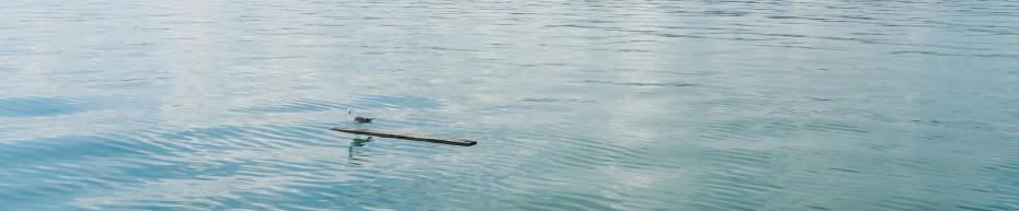 eine Möve auf dem Bodensee, bei Windstille